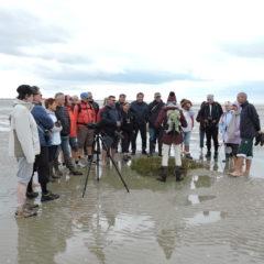 A la découverte de la baie de Somme -octobre 2019